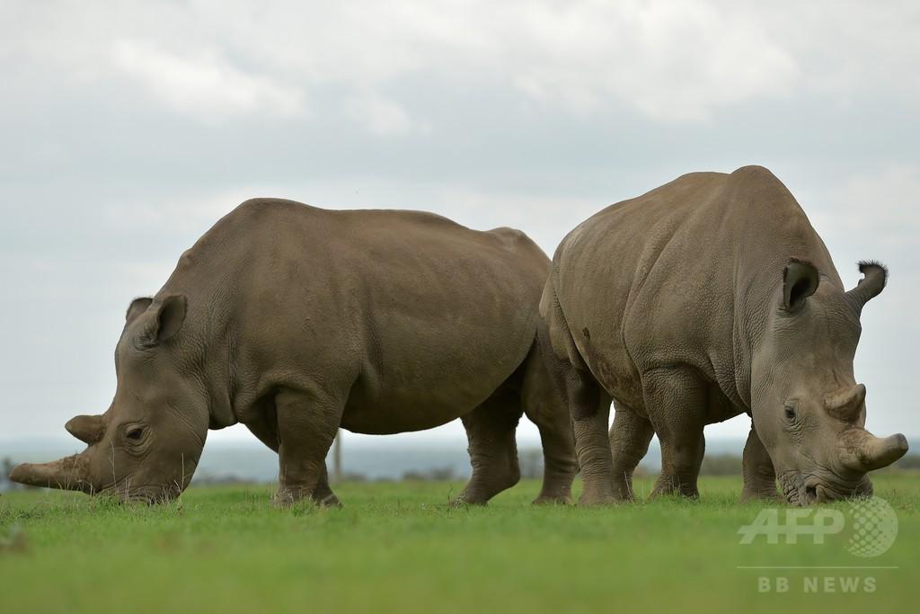 迷信と「いんちき療法」の犠牲になる動物たち