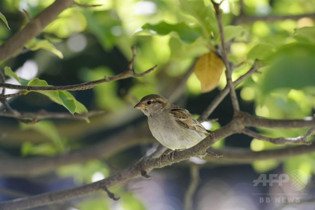 仏農業地域で野鳥の個体数激減、7割減の種も