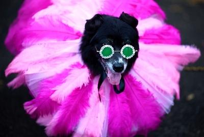話題の人物になりきるワンちゃんも…米NYでドッグパレード