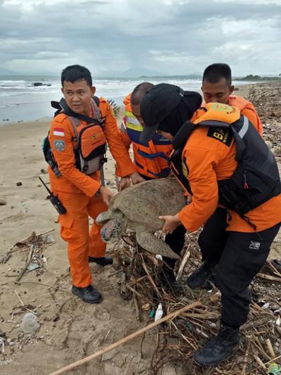 インドネシア津波、打ち上げられたウミガメも救助「すべての命が大切」
