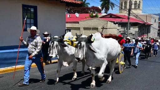 動画:牛車がカラフル! 無形文化遺産「伝統の牛飼い」のパレード コスタリカ