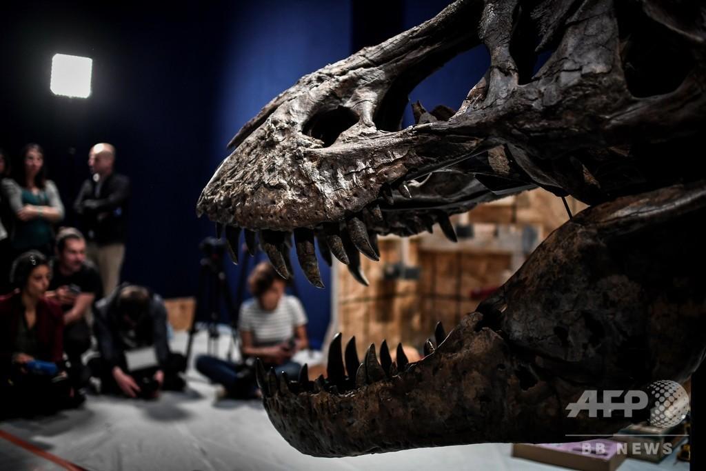 恐竜界の30年論争に決着、「新種」恐竜はT・レックスの幼体 研究