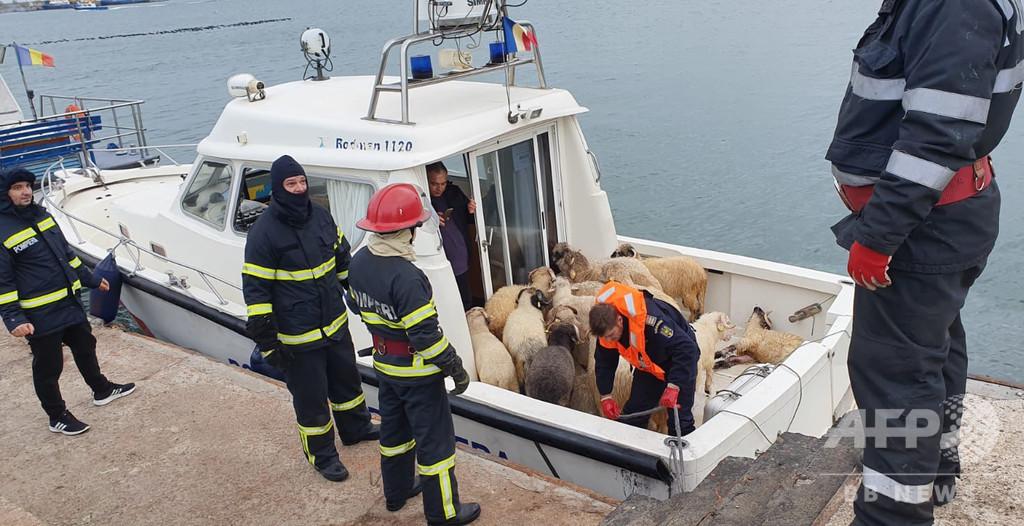 羊1万4600匹を乗せた貨物船が転覆 ルーマニア沖