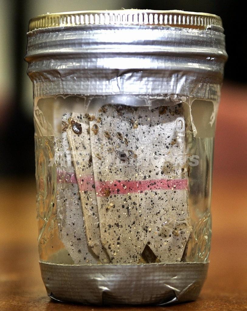 米国で南京虫の被害拡大、携帯やパソコンで繁殖