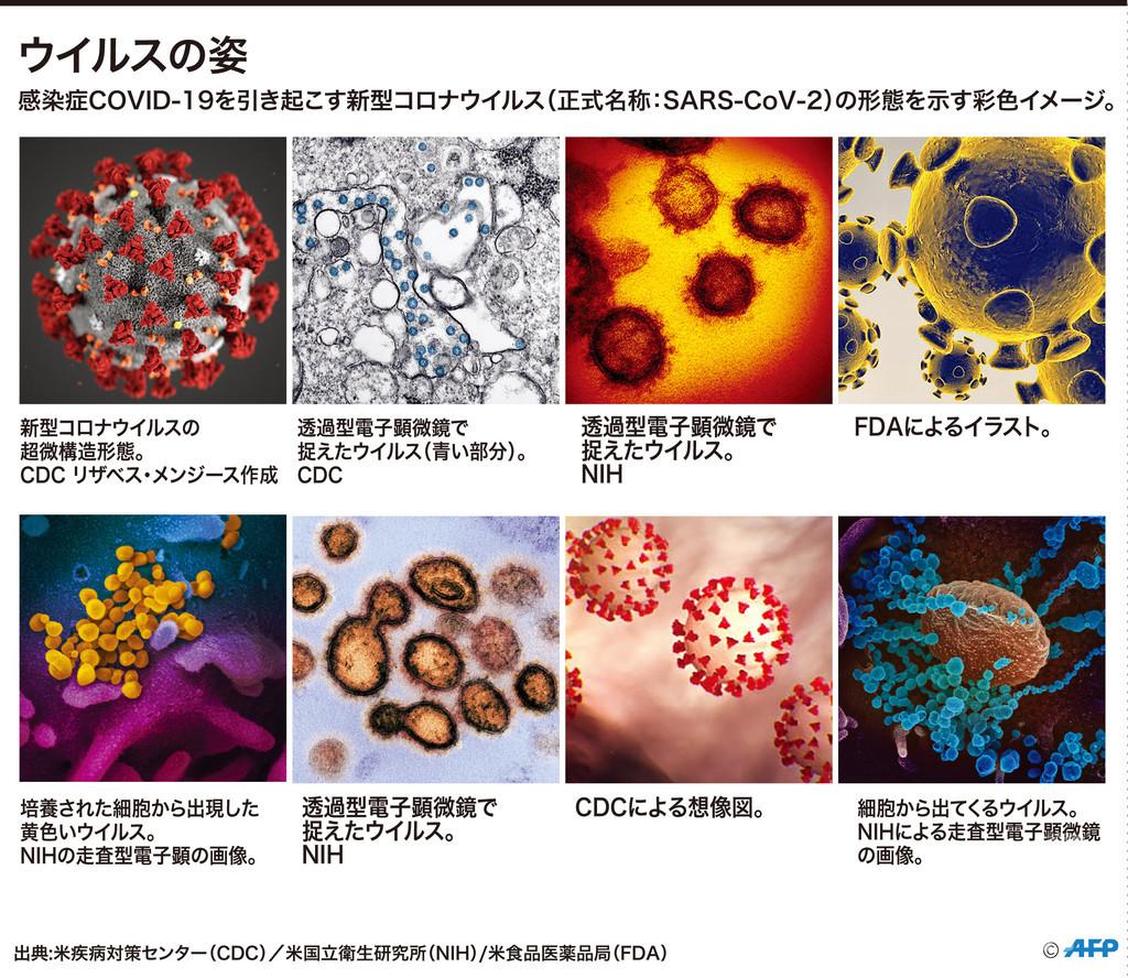 【図解】新型コロナウイルスの姿