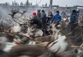 【AFP記者コラム】知られざる圧倒的な美─北欧の遊牧民サーミとトナカイの大移動
