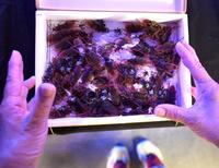 ゴキブリやネズミが大集合?「オレたち夏のキラわれ者」展 東京