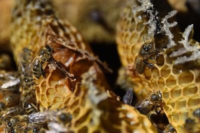 昆虫種の「壊滅的崩壊」、地球規模で進行中 研究