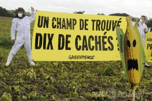 仏、遺伝子組み換えトウモロコシの栽培禁止を法制化