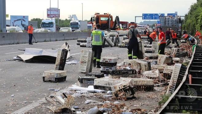 動画:高速道路でニワトリ7000羽が脱走! 積み荷落下で オーストリア