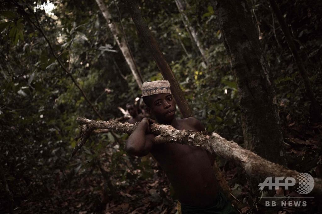 新しい病に弱いピグミー 保護区に隔離しコロナから守る動き 中央アフリカ