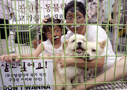 犬を食べる食習慣に反対、韓国の動物愛護活動家ら