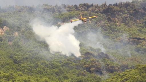 動画:空からの消火活動、ギリシャ山火事
