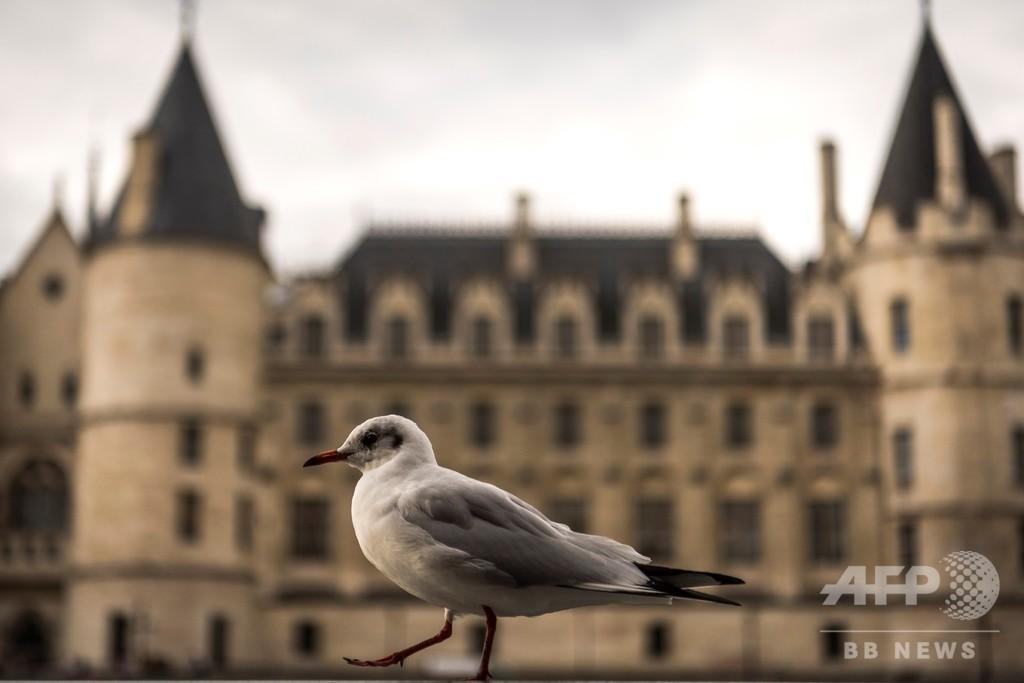 仏パリにカモメが集結、「騒がしい隣人」に住民いら立つ