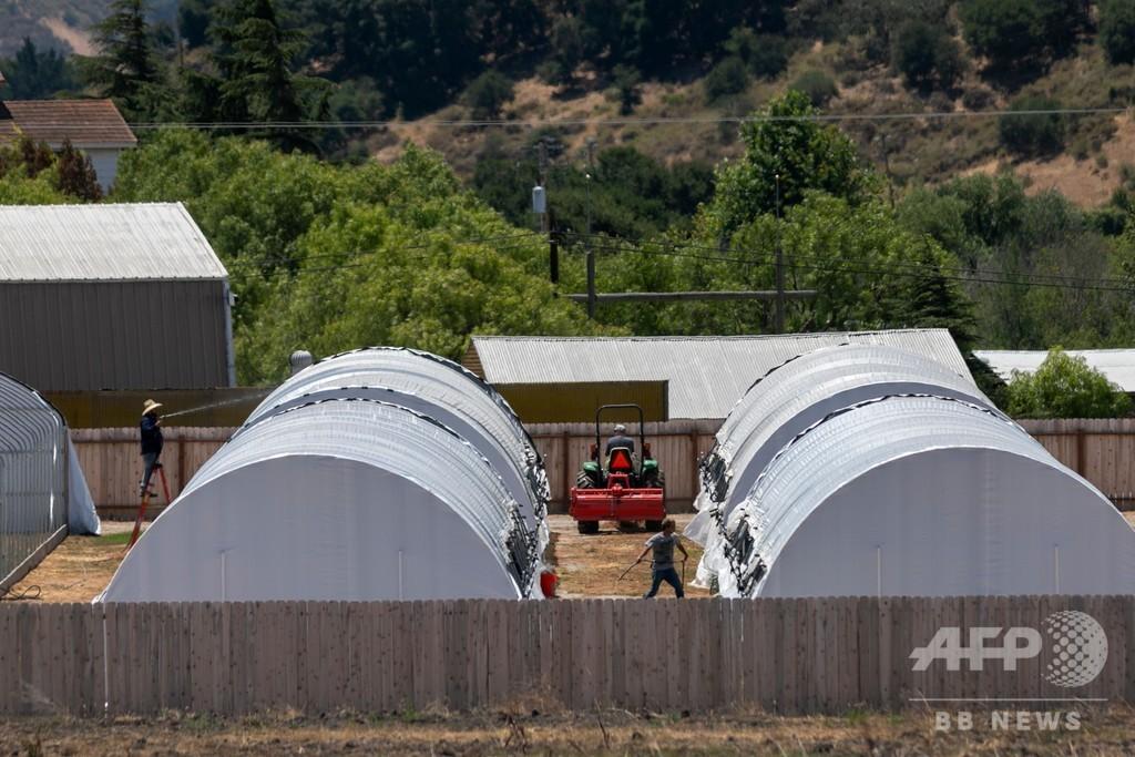 米ワイン産地で大麻栽培拡大、臭いや殺虫剤の使用で対立