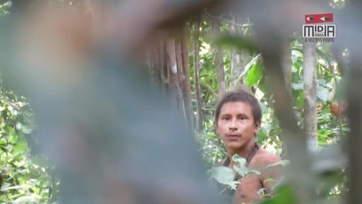 動画:ブラジル先住民の貴重映像公開、ボルソナロ政権下の伐採で絶滅の危機