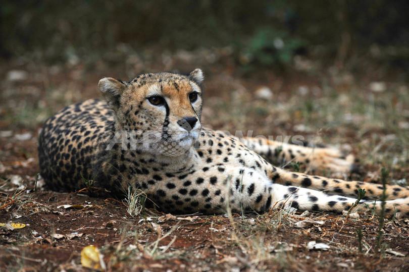 ボン条約国際会議、絶滅の危機に直面する動物21種を追加