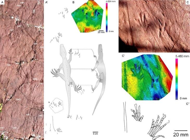 2億4800万年前の足跡化石を発見、未知の古代爬虫類 スペイン