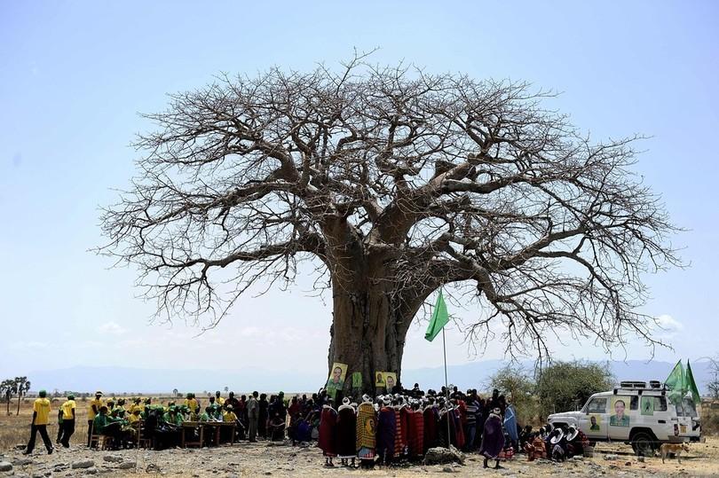 アフリカ最古級のバオバブ、過去10年で大量枯死 研究