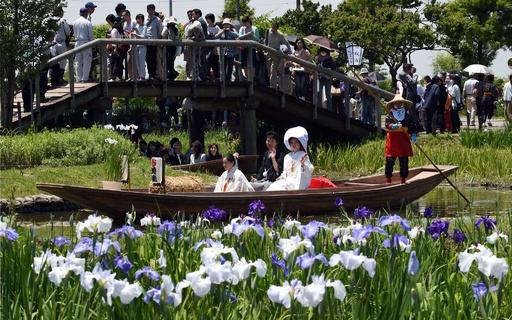 咲き誇るあやめの中を舟で嫁入り、千葉の伝統的な結婚式