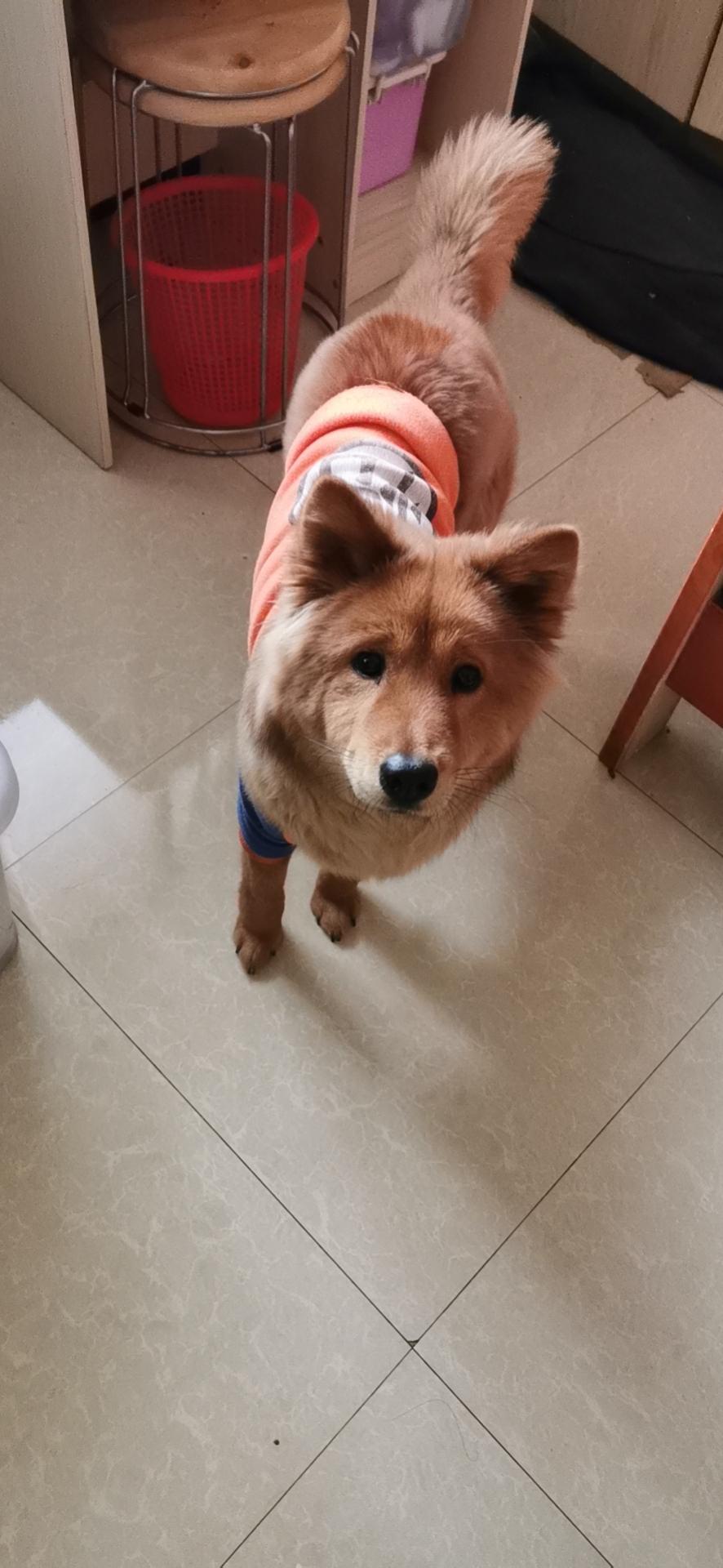 残されたペットを世話するボランティア 新型肺炎受け 中国
