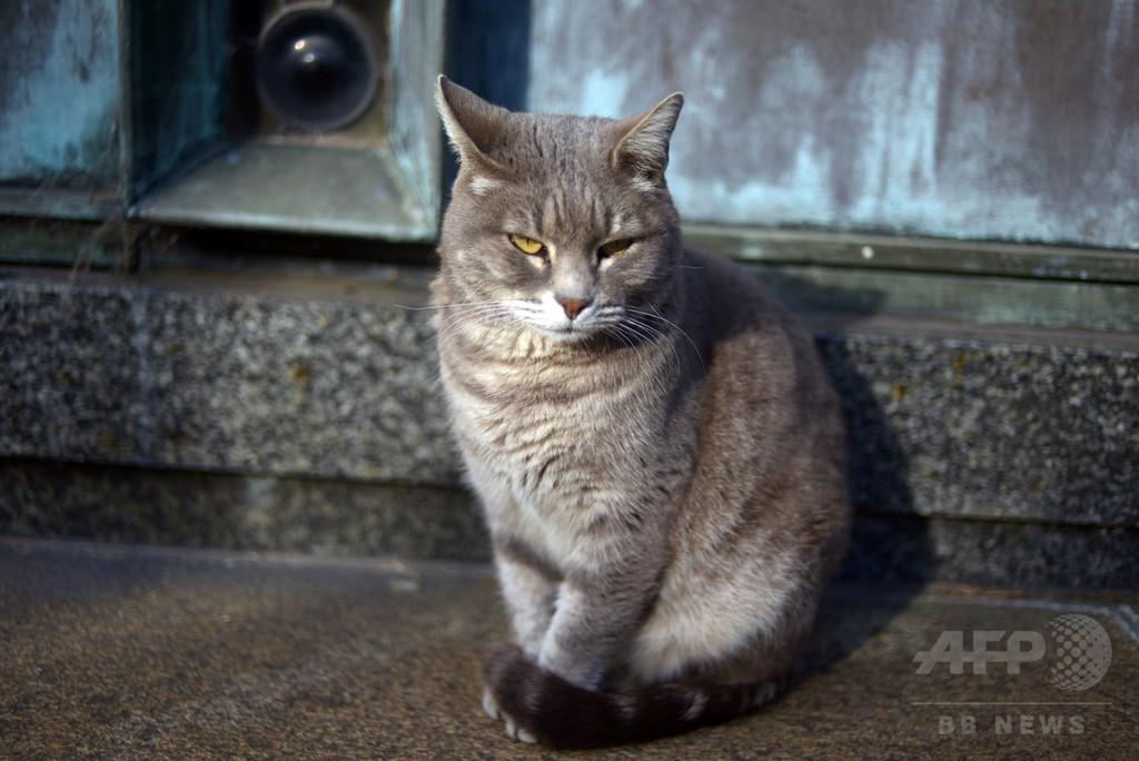 ネコにかまれた女、腹いせに飼い主をガブリ 独