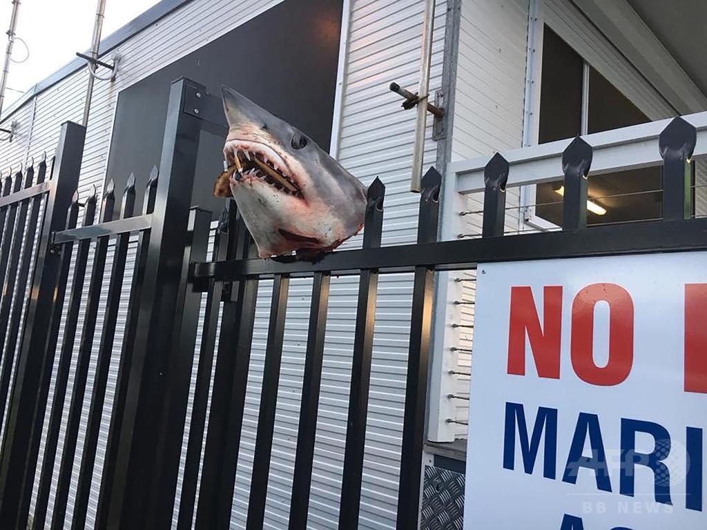 柵に突き刺されたサメの頭部発見…豪海難救助団体の事務所で