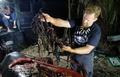 フィリピンの海岸でクジラ餓死 胃からプラごみ40キロ