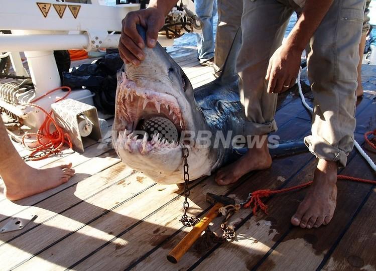 エジプト人気リゾートで再びサメ被害、観光客死亡