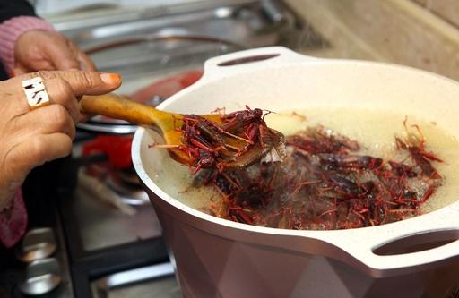 クウェートの冬の味覚「イナゴ」、栄養豊富なたんぱく源