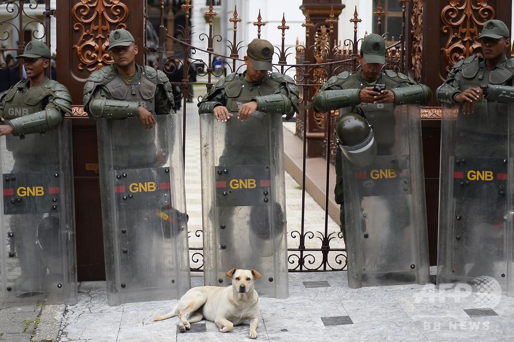 【今日の1枚】犬に守られる警備隊員