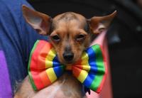 ニューヨークで「ゲイ・プライド」パレード、今年で48回目