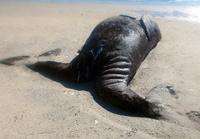 【特集】海の珍しい生き物