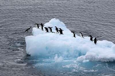 「雪竜号」から見た南極の氷山と動物の群れ