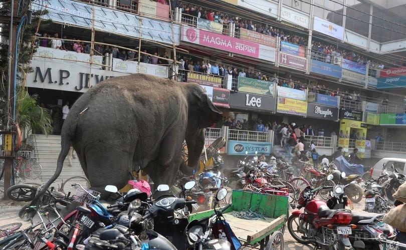 野生のゾウ大暴れ、建物100棟損壊 インド東部の町
