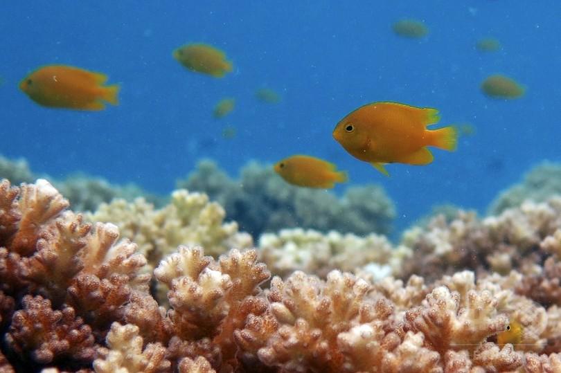 捕らえられた魚が「救助要請」、別の捕食動物呼ぶ 豪研究