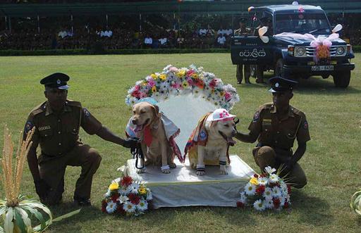 犬の「仏式」結婚式はダメ?スリランカ警察に批判