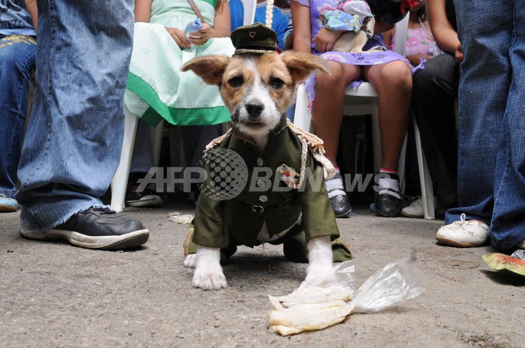 ペットの犬とともに祝う、聖ラザロの祭り