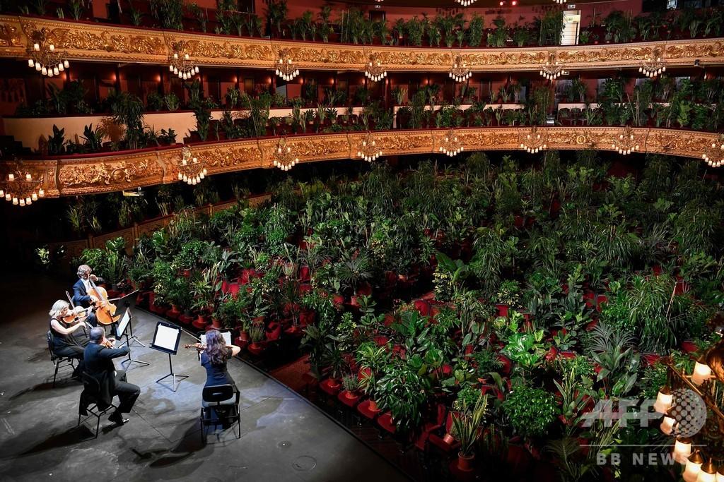 オペラ劇場最初の客は植物 ロックダウン緩和進むスペイン