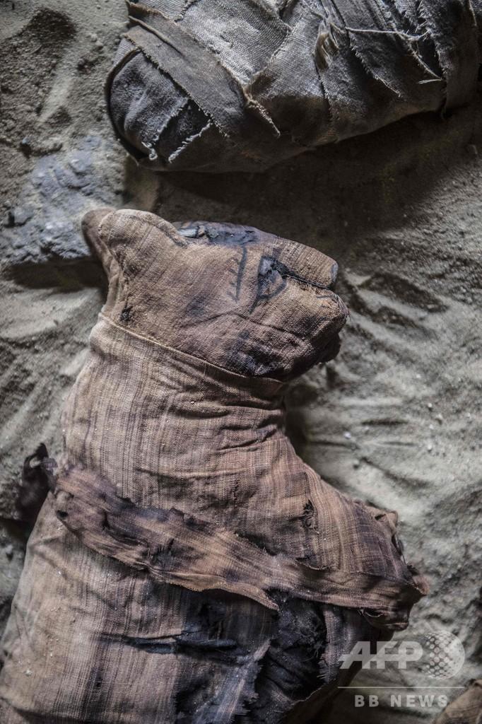 猫のミイラや銅像など発見、エジプト古代都市サッカラの遺跡