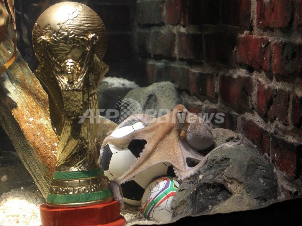 W杯8試合的中の占いタコに優勝トロフィー、ドイツ