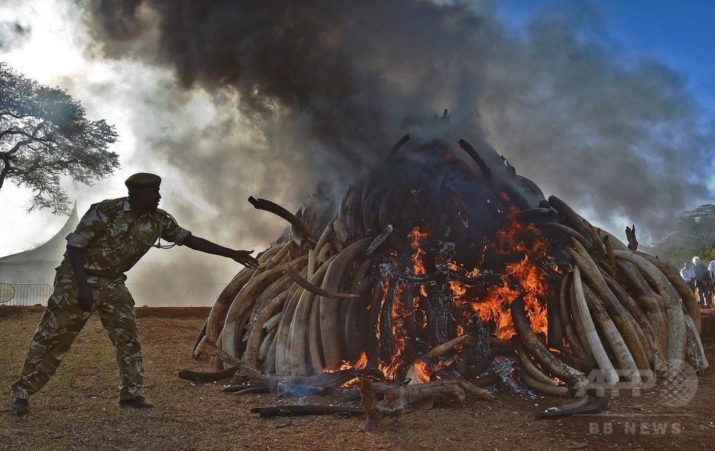 モザンビークの野生ゾウ、密猟で半減