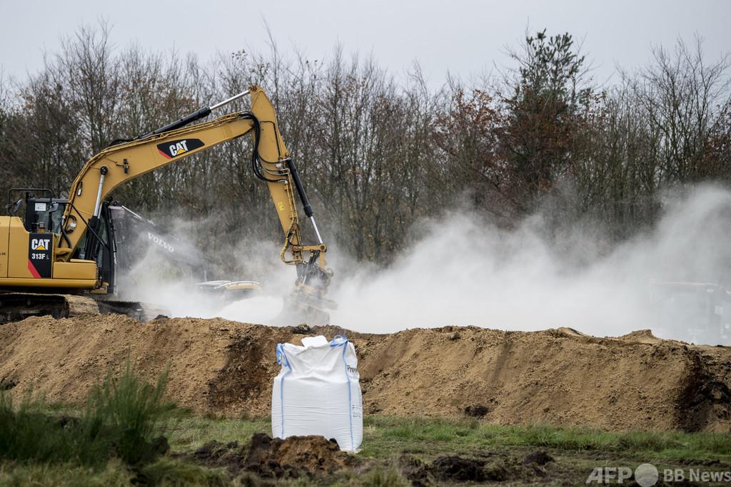 殺処分のミンク、掘り起こしを検討 デンマーク