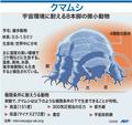 微小動物「クマムシ」