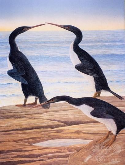 古代の巨大ペンギン、恐竜と共存 NZで発見の化石で判明
