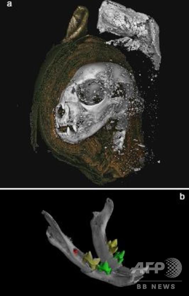 エジプトの動物ミイラ、内部をX線で初めて解明 口開いたコブラも
