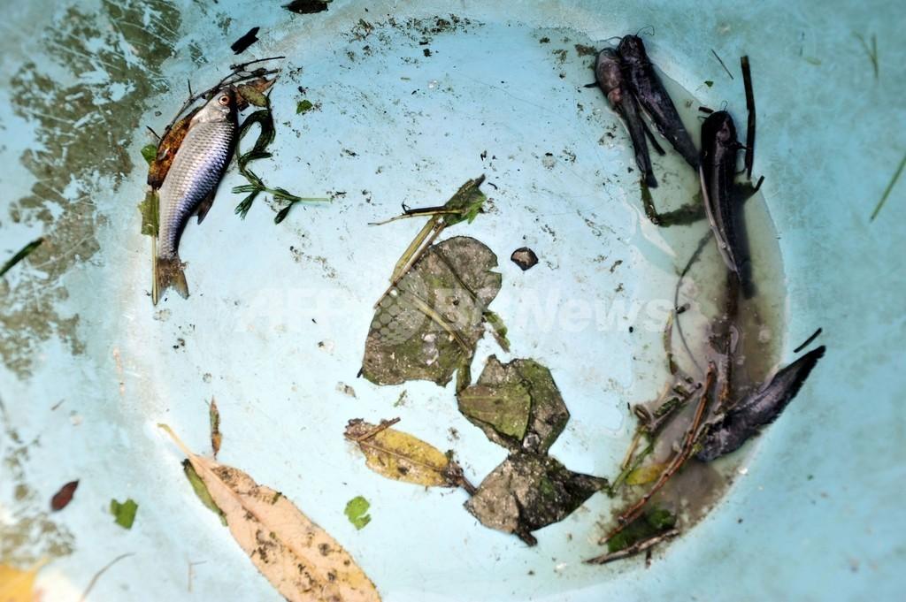 有害廃液ドナウ川に到達、流域国は警戒強化