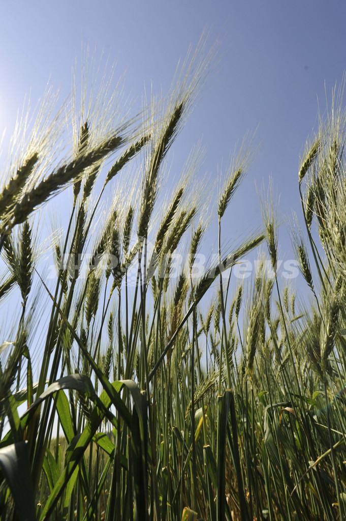 温暖化と消費社会のグローバル化、世界の脅威に 国連報告