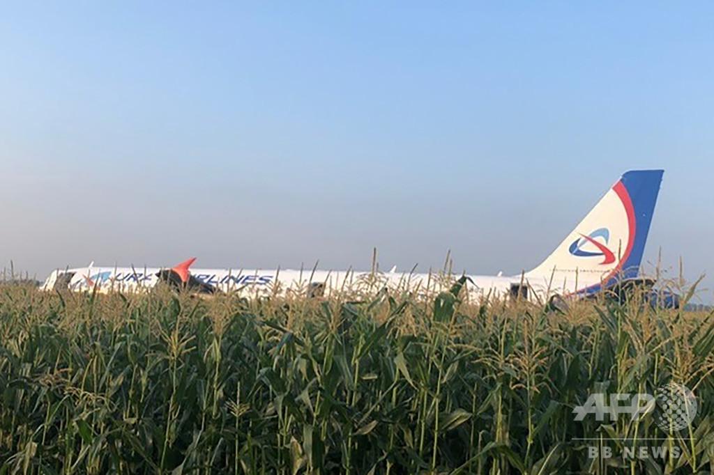 ロシア機がトウモロコシ畑に緊急着陸、カモメの群れと衝突