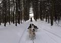 寒波のカナダ、一部地域で氷点下50度近くに 年末イベントにも影響